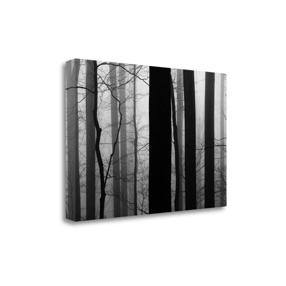 """""""Forest Code"""" By Nicholas Bell, Fine Art Giclee Print on Gallery Wrap Canvas. Picture 1"""