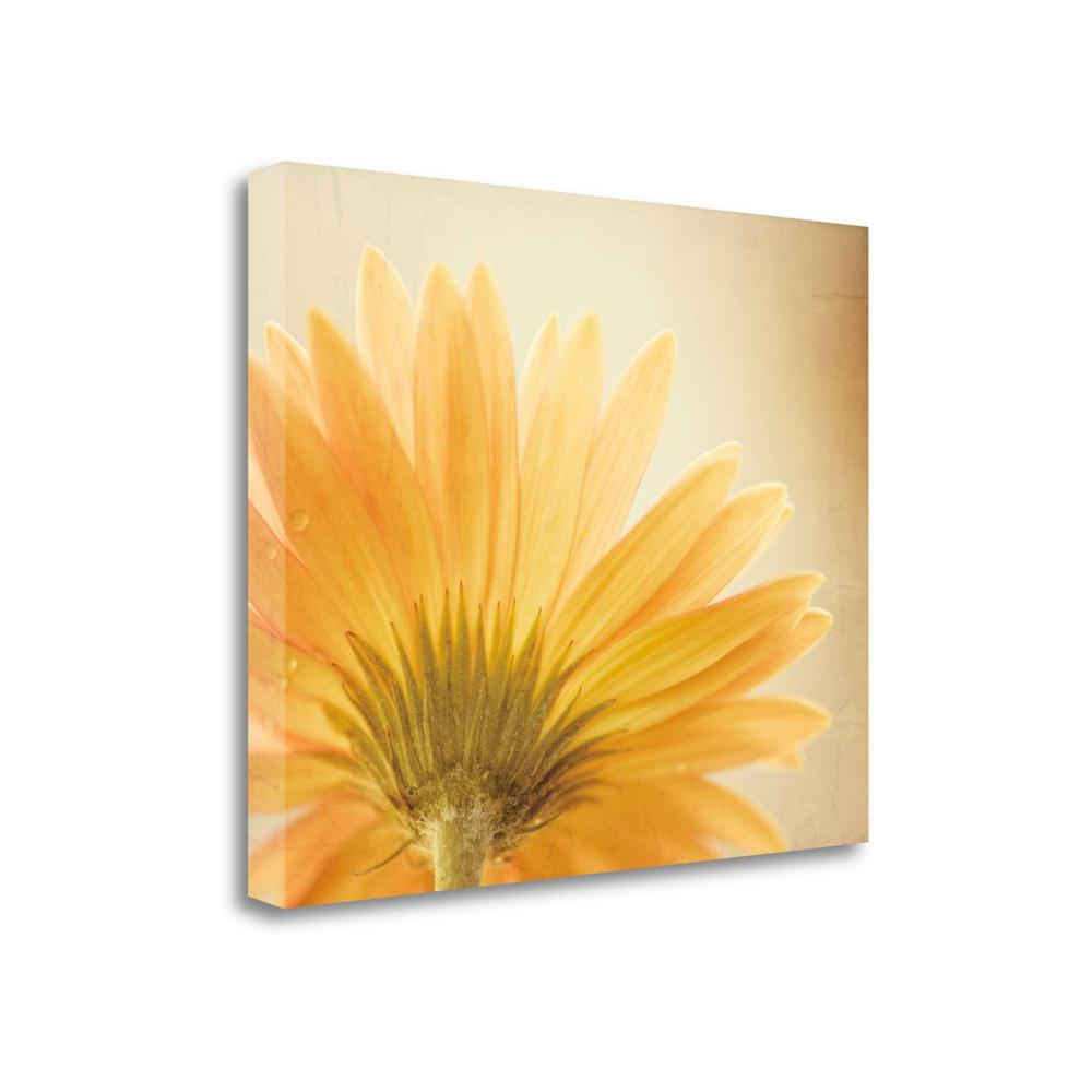 """Butterscotch"" By Carolyn Cochrane, Giclee Print on Gallery Wrap Canvas. Picture 1"
