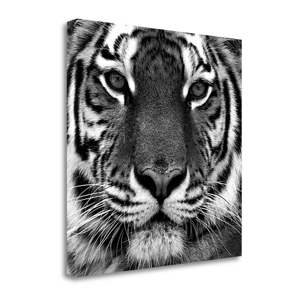 """""""Tiger"""" By Photoinc Studio, Fine Art Giclee Print on Gallery Wrap Canvas. Picture 1"""