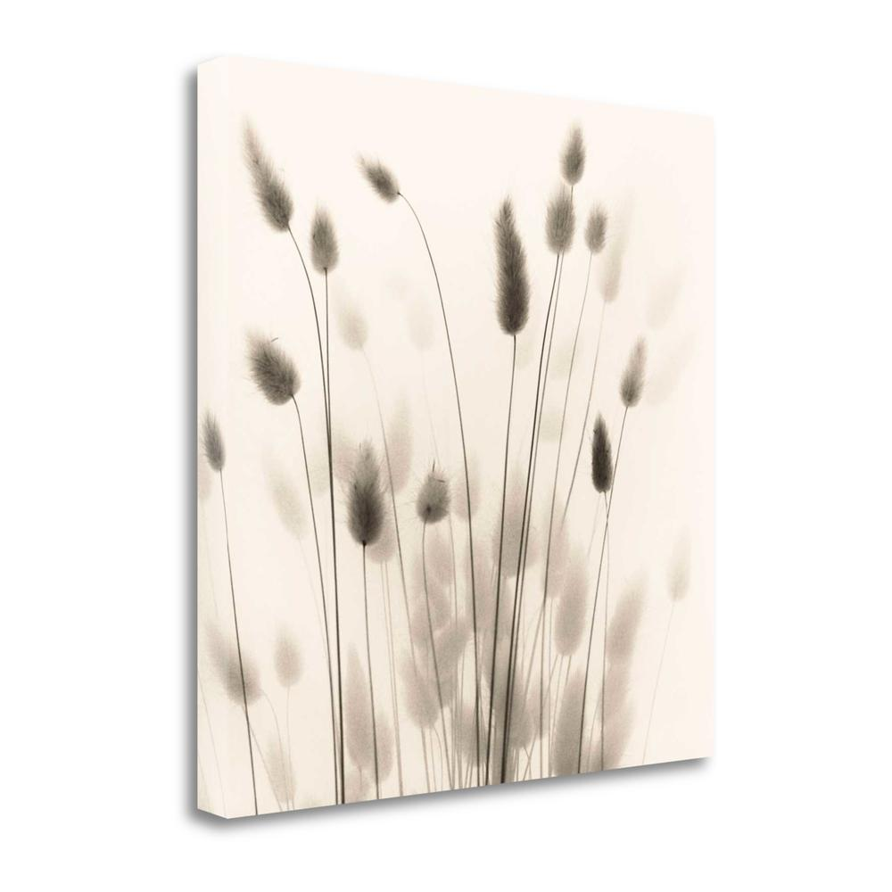 """Italian Tall Grass No. 1"" By Alan Blaustein, Giclee on Gallery Wrap Canvas. The main picture."