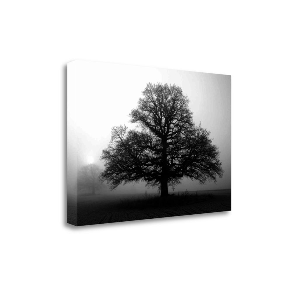 """""""Tree In Mist 2"""" By Photoinc Studio, Giclee Print on Gallery Wrap Canvas. Picture 1"""