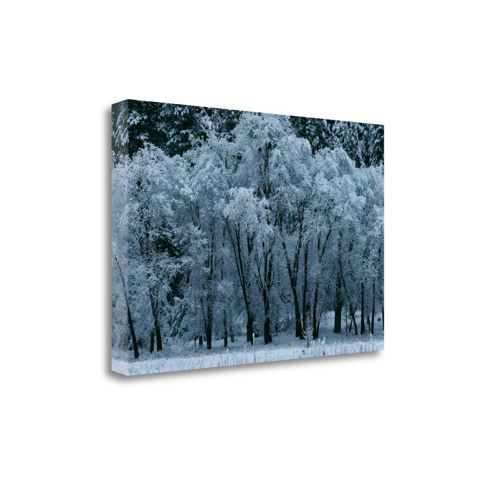 """Black Oaks Yosemite"" By Alain Thomas, Giclee Print on Gallery Wrap Canvas. Picture 1"