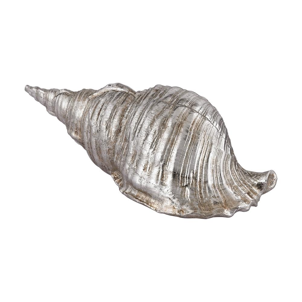 Silver Cone Shell. Picture 1