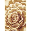 "KAS Rugs Corinthian 5338 Ivory Floral Splendor 3'3"" x 4'11"" Size Area Rug"