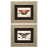 Propac Images 1176 Butterfly, Pack of 2