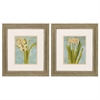 1832 Hyacinth, Pack of 2