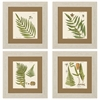 Propac Images 3641 Fern, Pack of 4