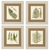 Propac Images 3642 Fern, Pack of 4