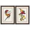 Propac Images 3846 Lemaire Parrots, Pack of 2