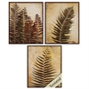 Propac Images 3943 Ferns, Pack of 3