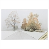 3981 AUTUMN SNOWFALL