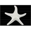 Ceramic Sea Star Figurine Gloss Finish White