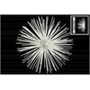 Metal Sea Urchin Ornamental Sculpture  Wall Decor LG Coated Finish White