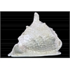 Ceramic Spiny Conch Seashell Figurine Gloss Finish White