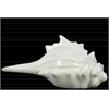 Ceramic Conch Seashell Figurine Distressed Gloss Finish White