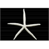 Polyresin Sea Star Figurine Washed Finish White