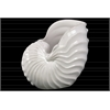 Ceramic Nautilus Seashell Figurine Gloss Finish White