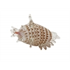 "Glass Sea Shell 9""W, 6""H"