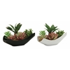 Benzara Riveting 2 Assorted Pvc Ceramic Succulent