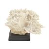 Adorable Ps Coral, White & Black