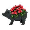 "Attractive Polyresin Pig Flower Pot 18""W, 10""H"