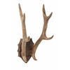 Vintage Ophelia Wood Antler Mount, Natural
