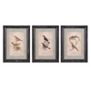 Artistic Woodland Bird Wall Decor - Assorted 3, Multicolor