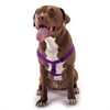 15in -25in Step In Harness Purple, Lrg 40 - 120 lbs Dog By Pet Products