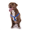 Majestic 15in -25in Step In Harness Blue,  Lrg 40 - 120 lbs Dog By Majestic Pet Products