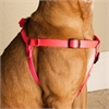 Majestic 9in - 15in Step In Harness Pink, Sml 10 - 45 lbs Dog By Majestic Pet Products