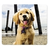 Recycled Mouse Pads, Puppy at Beach, 9 x 8 x 1/16
