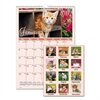 AT-A-GLANCE Kittens Wall Calendar, 12 x 17, 2017