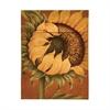 Tuscan Sunflower