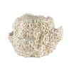 Dimond Home Cretaceous Clam Shell Aged White