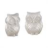 Noctua Owl