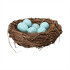European Starling Eggs In Nest Blue