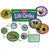 EDUPRESS EXPLORING LIFE CYCLES BB SET