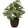 "First Base Elementals Watermelon Peperomia Plant - 21"" Tall - Watermelon Peperomia - Pot - Green, Black - 1 Each"