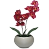 "First Base Elementals Moth Orchid Fuchsia Plant - 14"" Tall - Moth Orchid Fuchsia - Pot - Purple, Green - 1 Each"