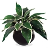 "Glolite Nu-dell Dracaena Plant - 84"" Tall - Dracaena - Pot1 Each"