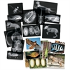 Roylco Animal X-Ray - Theme/Subject: Radiology - Skill Learning: Fish, Animal, Amphibian, Bird, Reptile - 4+