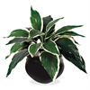 "Glolite Nu-dell NuDell Artificial Hosta Plant - 14"" Tall - Dracaena - Pot1 Each"