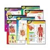 "Trend The Human Body Chart Pack - 17"" Width x 22"" Height - Assorted"